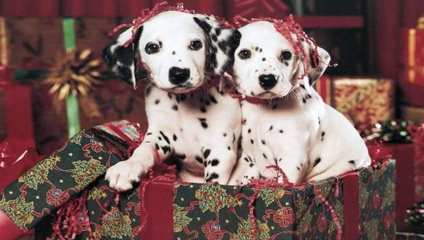 8 Spot-On Gifts for Dedicated Dalmatian Lovers