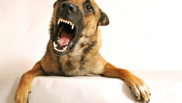 Why Dog Growling Is a Good Thing