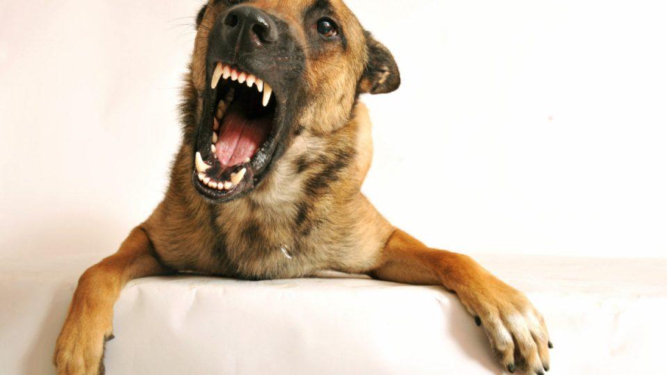 Best Dog Names For Traininh