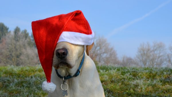 Quiz: Which Movie Santa Is Your Dog?