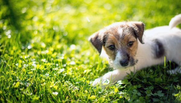 5 Essential Training Tips for Every New Puppy