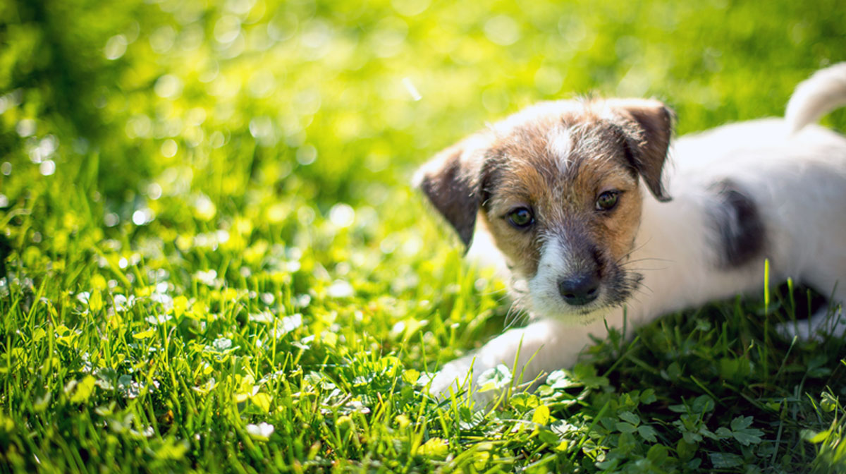 5 Essential Training Tips For Every New Puppy The Dog People By Rover Com