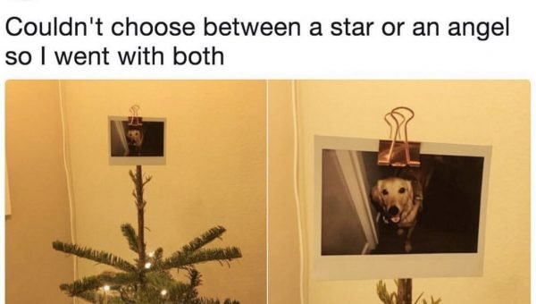 Dog Lover's Photo of Her Perfect Christmas Tree Topper Goes Viral
