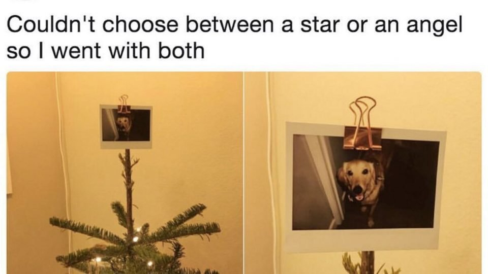 Christmas Tree Meme.Dog Lover S Photo Of Her Perfect Christmas Tree Topper Goes