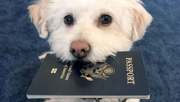 Traveling with Your Dog: Get Expert Tips from a Professional Trainer for a Smooth Trip