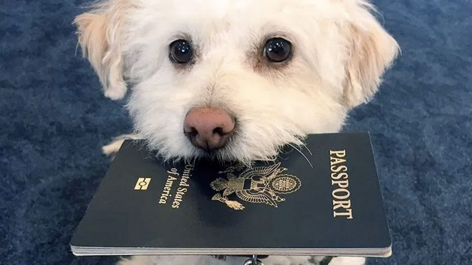 Traveling with Your Dog: Get Expert Tips from a Professional ...
