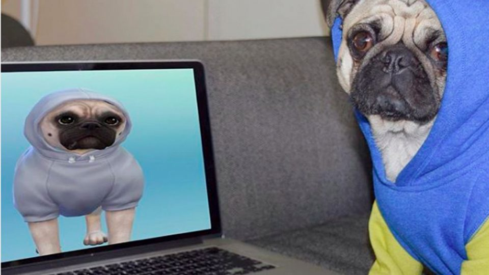 Celebrity Dogs Of Instagram Get The Sims Makeovers The Dog