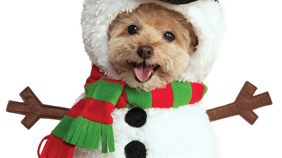 Bonding ... - 11 Best Christmas Dog Outfits To Get Your Dog In The Holiday Spirit
