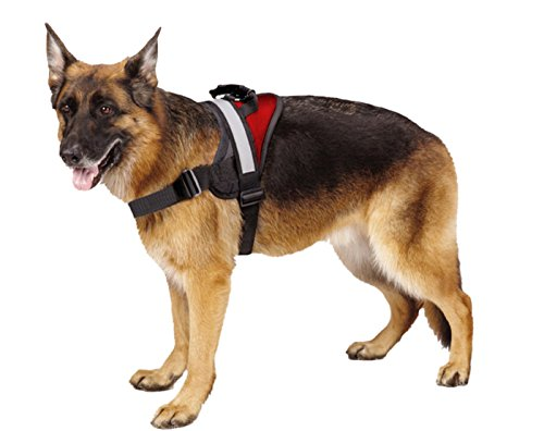 The 6 Best Harnesses For Large Dogs Roverrhrover: Large Dog Harness At Elf-jo.com