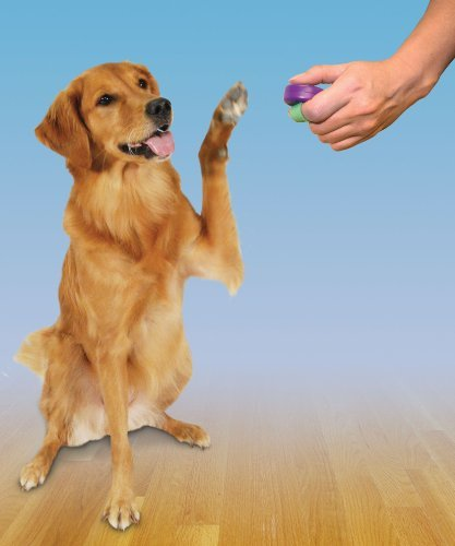 clicker training for dogs is effective
