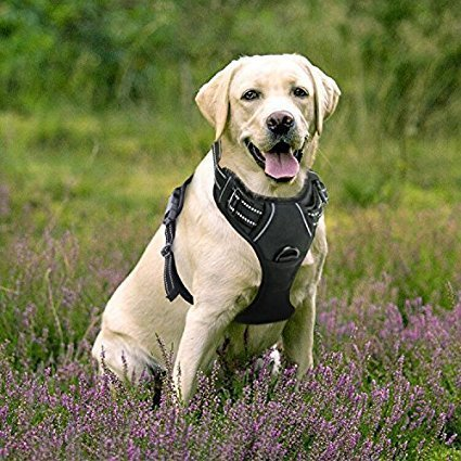 51vz3Xp1DvL the 6 best harnesses for large dogs the dog people by rover com