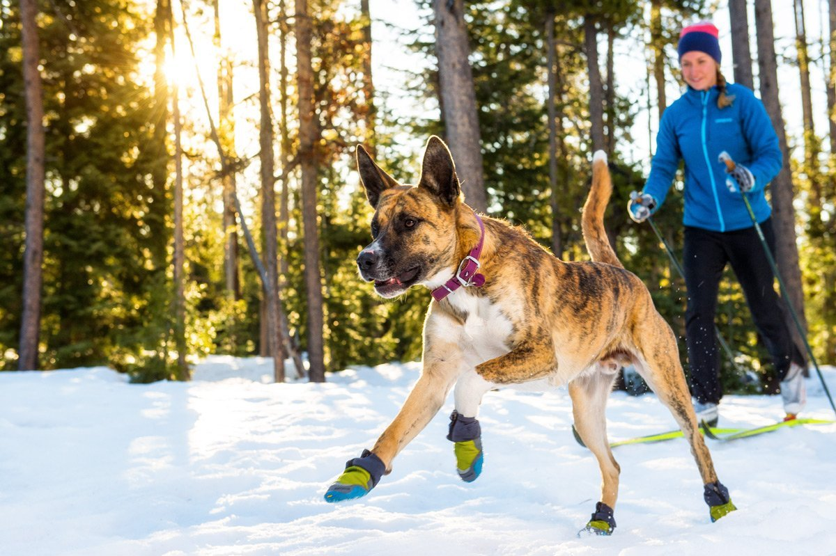 dog snow boots for hiking