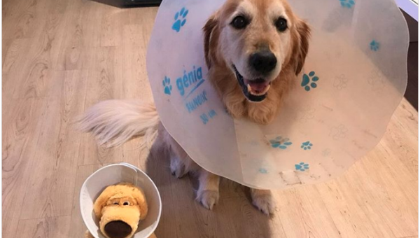 Sick Dog Gets New Toy to Share Cone of Shame (and Snuggles)