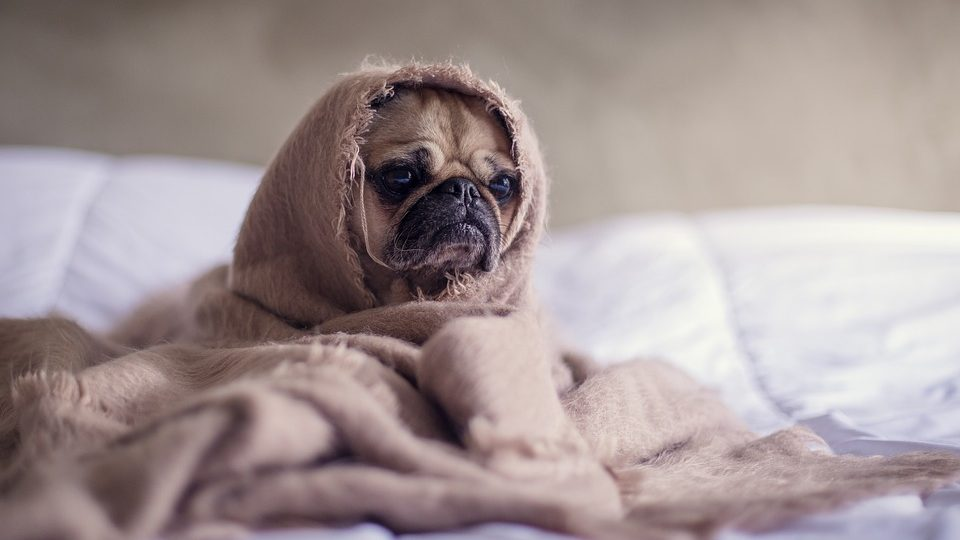 Can Dogs Get Colds? | How to Tell if your Dog Has a Cold