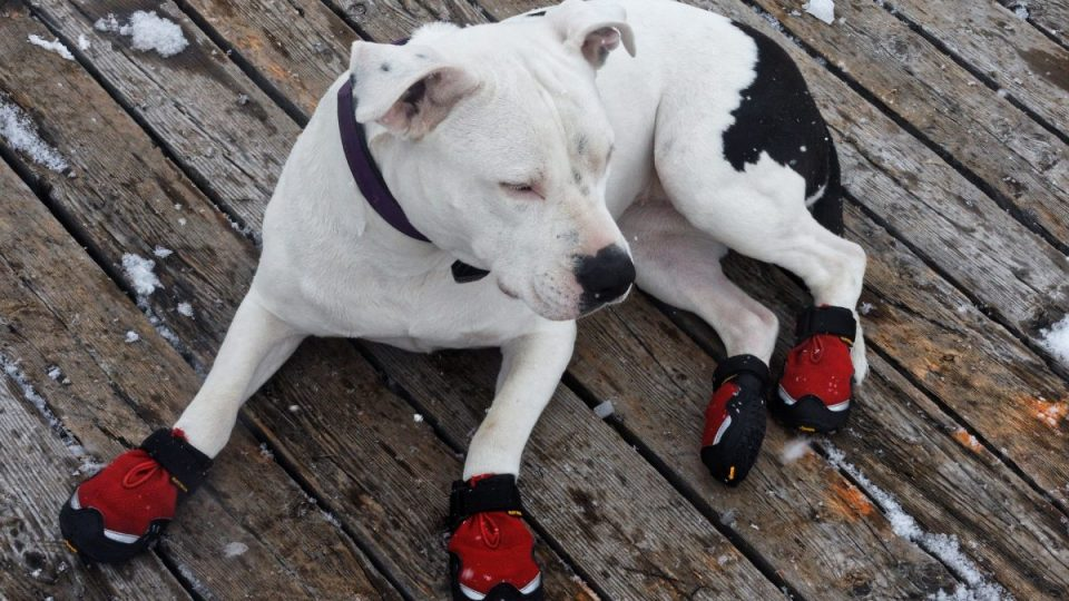 dog in snow boots on porch