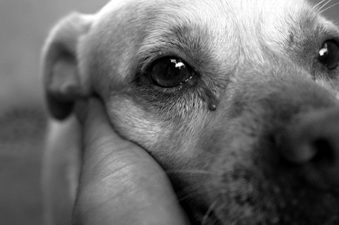 Do Dogs Cry Your Guide To Dog Tears And Emotions