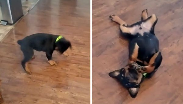 Dramatic Puppy Hilariously Defeated by Nefarious Collar [Video]