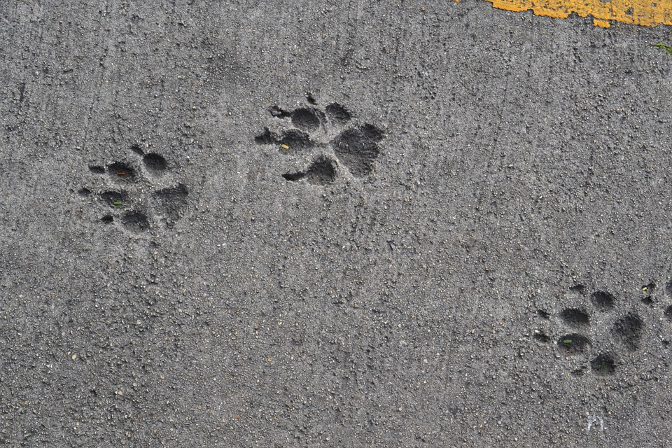 Dog paw prints in wet cement