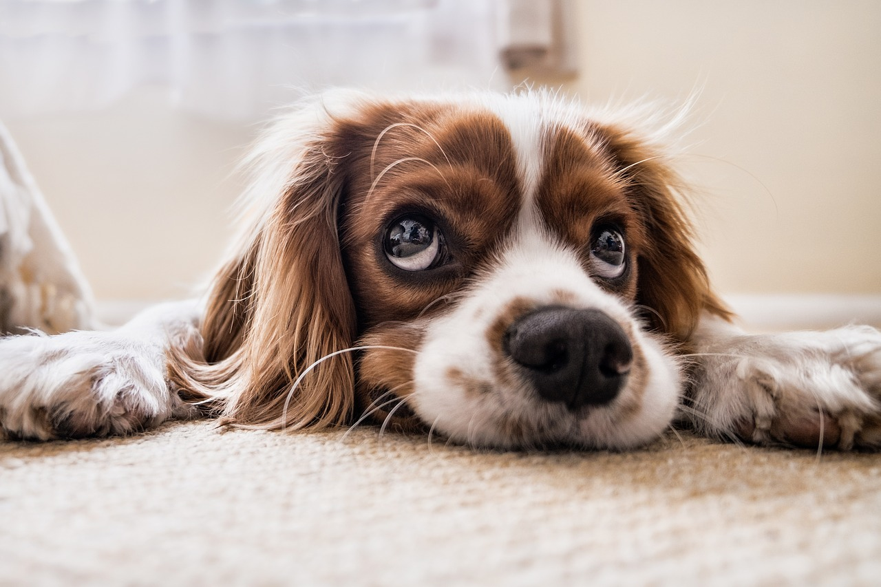 Anxious Puppy Is Your Dog Anxious? L...