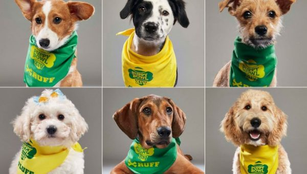 Don't Miss the Puppy Bowl XIV Trailer and the Cutest MVPs You Ever Saw