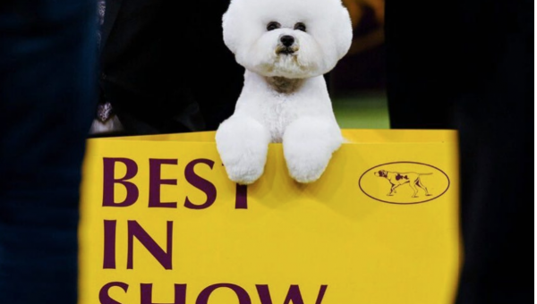 Winners at the Westminster Dog Show Include Fantastic Floofs and a Rescue Dog Agility Champ
