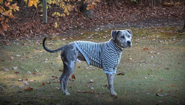 10 Best Dog Clothes for Large Dogs Because They Deserve to Dress Up, Too