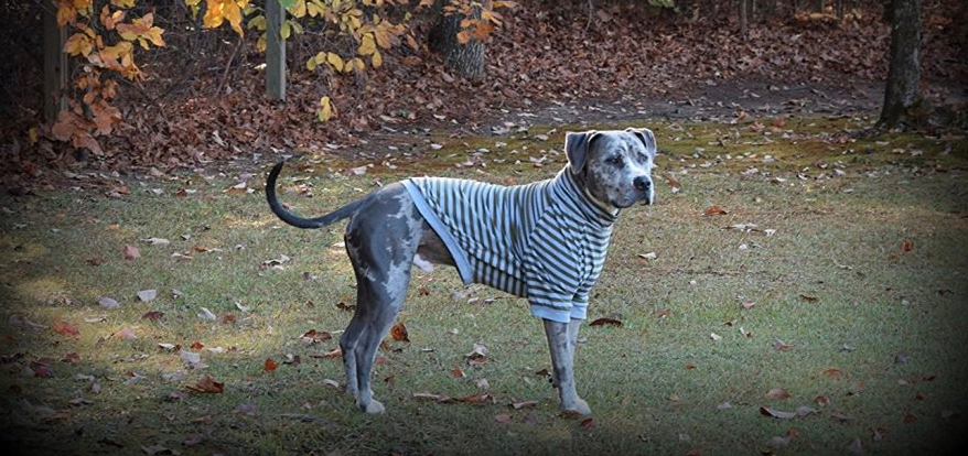 10 Best Dog Clothes For Large Dogs Because They Deserve To Dress Up