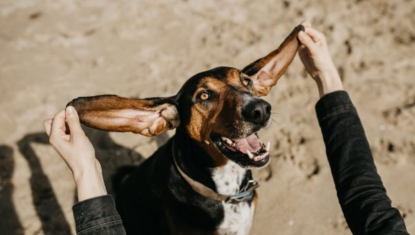 9 Reasons Dogs Make the Very Best Friends, the End