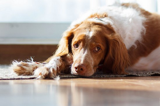 Do Dogs Get Depressed During Winter