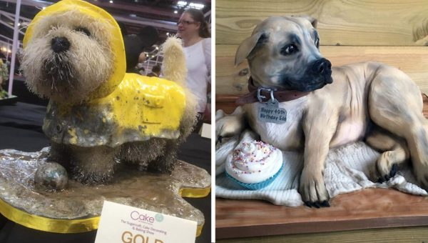 Talented British Baker Wows with Lifelike Dog Cakes