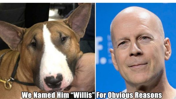 12 Dogs Named After Their Celebrity Lookalikes