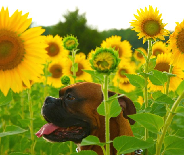 10 of the Safest Flowers for Dogs You Can Buy or Grow | The