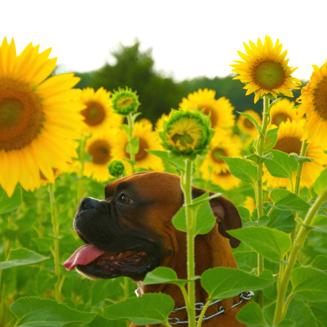 10 Of The Safest Flowers For Dogs You Can Buy Or Grow