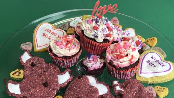 valentines day treats for your dog