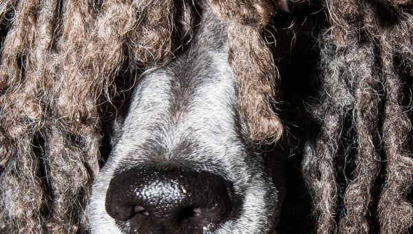Mesmerizing New Photo Series Gets Up Close and Personal with Dogs