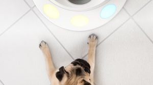 dog interacting with CleverPet high-tech pet product game hub