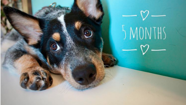 Your Puppy's Emotional Development Month by Month
