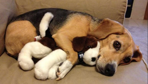 9 Soothing Toys for Anxious Dogs to Help When You Can't Be There