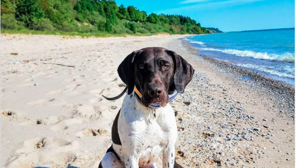 7 Best Dog-Friendly Beaches in Michigan
