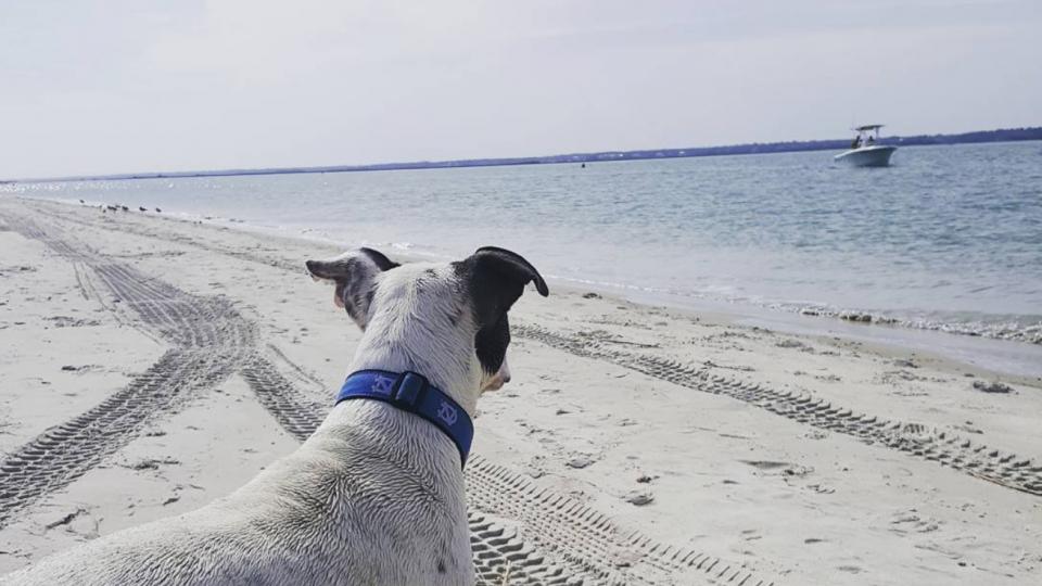 dog beaches in wilmington north carolina