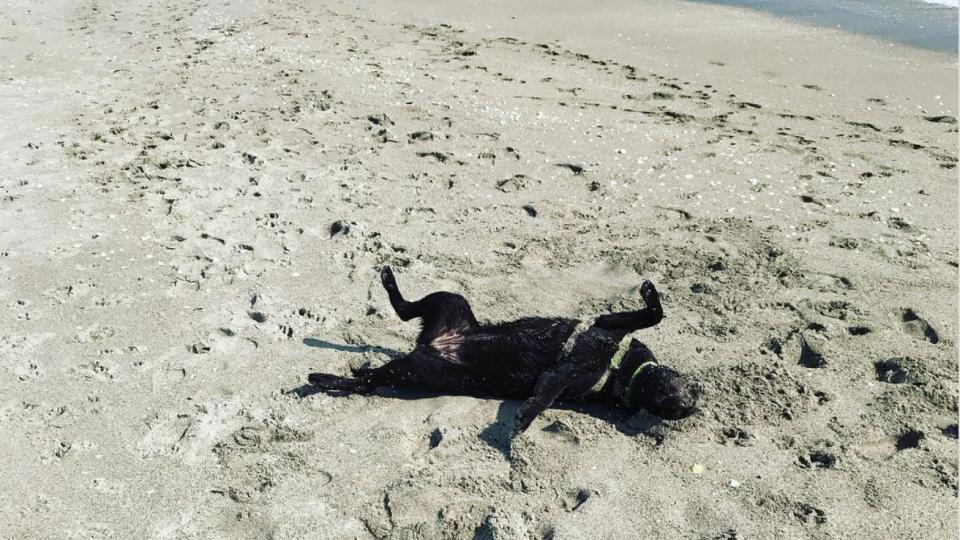 dog beach jupiter beach florida