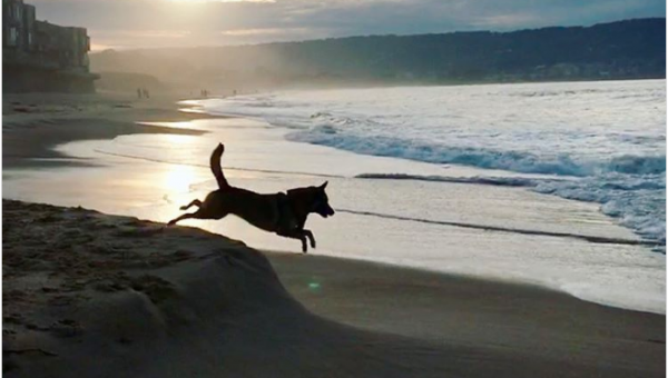 The Top 9 Dog Beaches in California