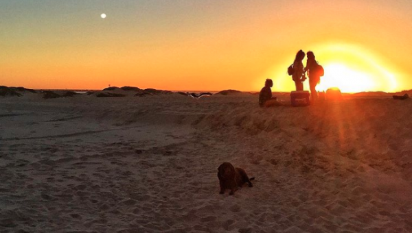 Top 6 Dog Beaches in Ventura