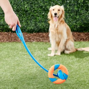 dog watching Chuckit ring thrower