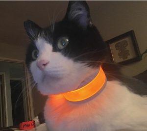 Glow Track light up cat collar