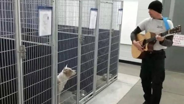 Animal Officer Serenades Shelter Dogs in Sweet Moment Caught on Video
