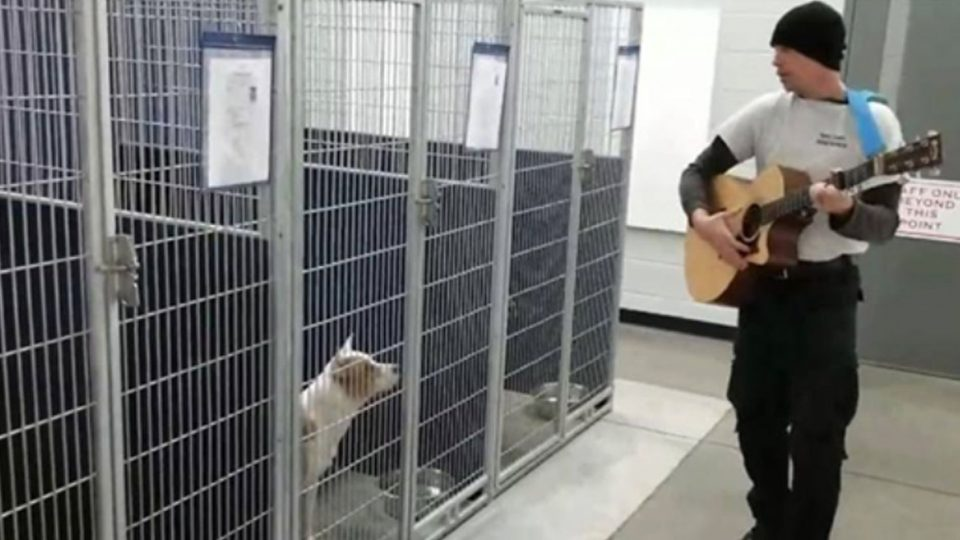 animal control officer serenades dogs at vounce county animal shelter HERO