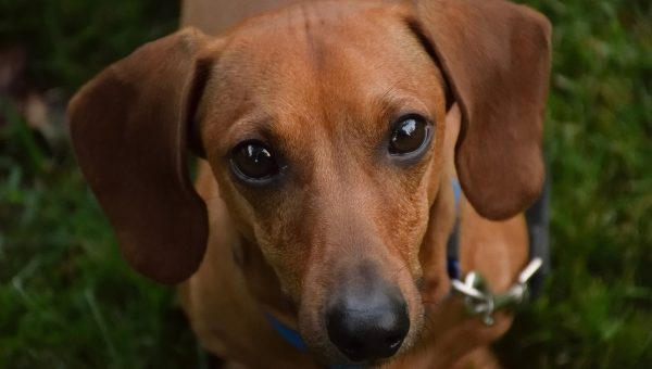 Do Dogs Get Sad? How to Tell and What to Do