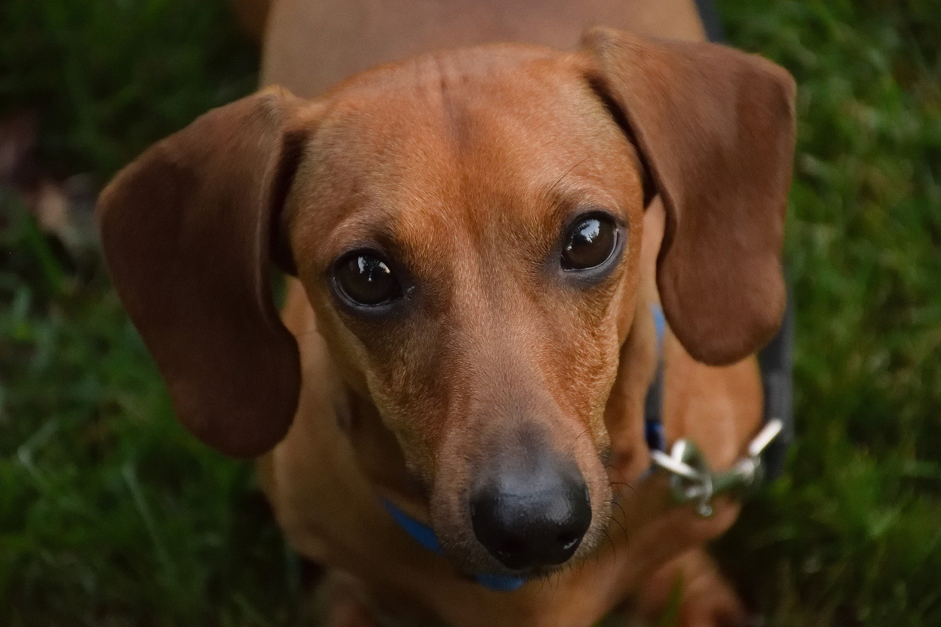 Do Dogs Get Sad? How to Tell and What to Do | The Dog ...