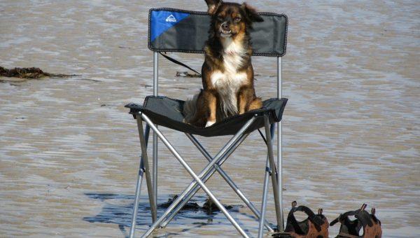 Top 3 Dog Beaches in Miami Beach